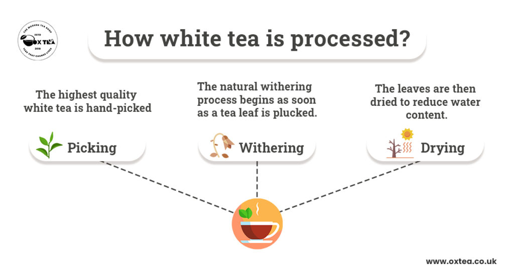 WHITE TEA: MEANING, HISTORY, BENEFITS, PROCESSING, CAFFEINE CONTENT