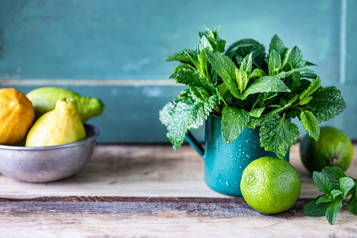 Health benefits of Lemon Balm Tea
